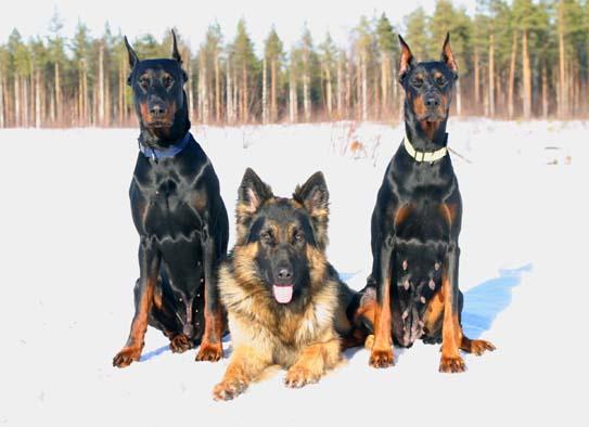 Kuvassa vasemmalta Jac, Xero ja Xena